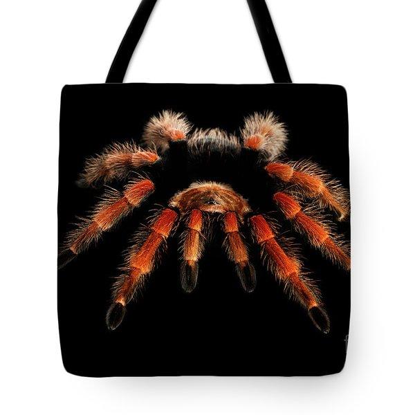 Big Hairy Tarantula Theraphosidae Isolated On Black Background Tote Bag