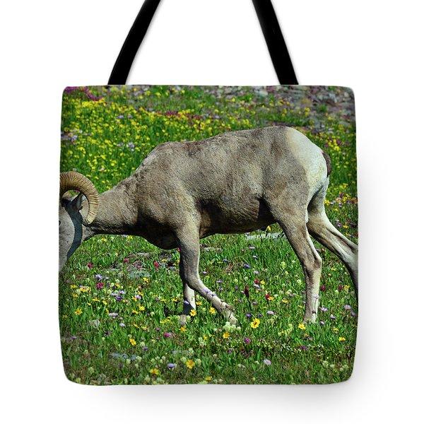 Big Horn Ram Eating Flowers In Glacier National Park Tote Bag