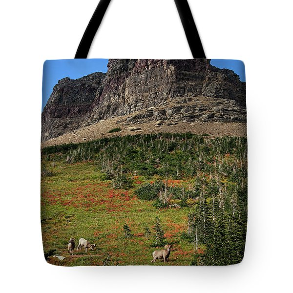 Big Horn Sheep Tote Bag by Lawrence Boothby