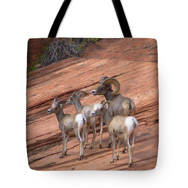 Big Horn Sheep, Zion National Park Tote Bag