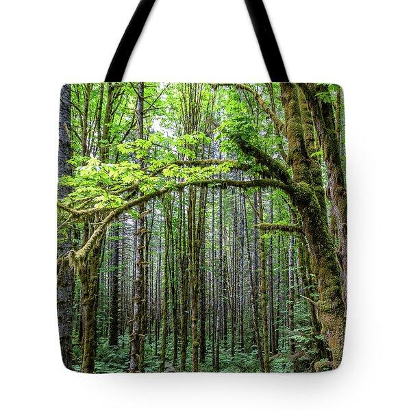 Big Leafe Maples Tote Bag