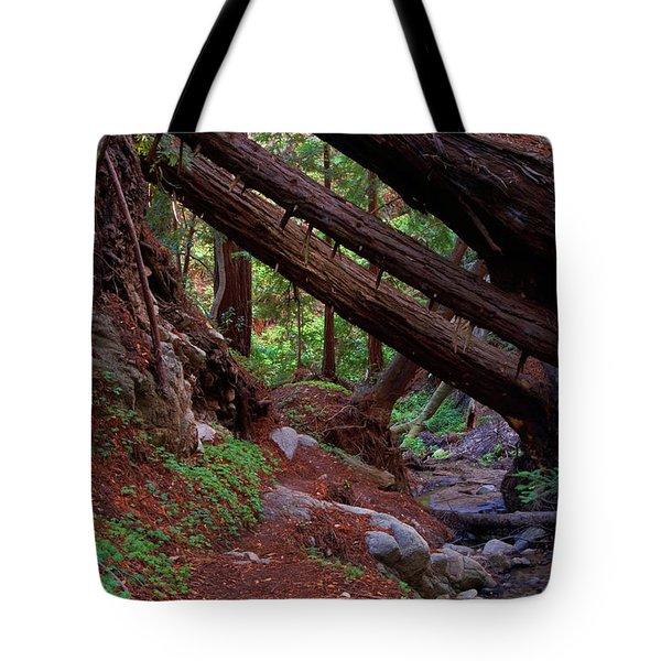 Big Sur Redwood Canyon Tote Bag