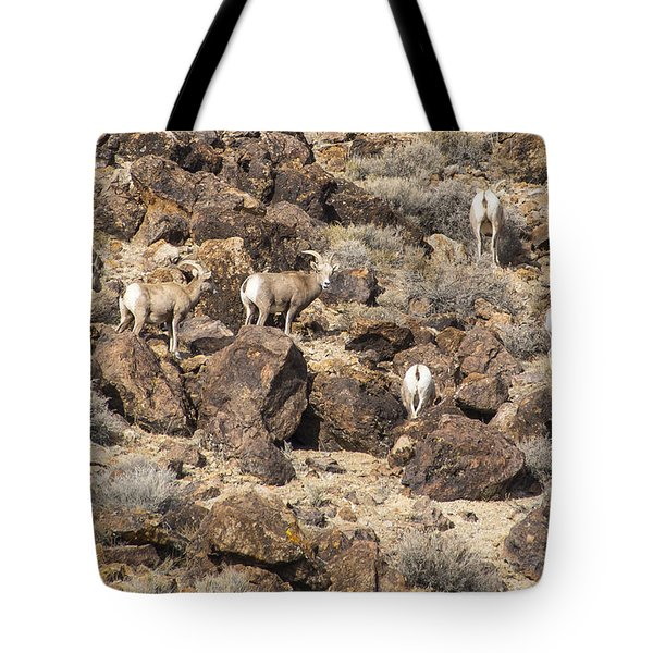 Tote Bag featuring the photograph Bighorn Camouflage  by Janis Knight