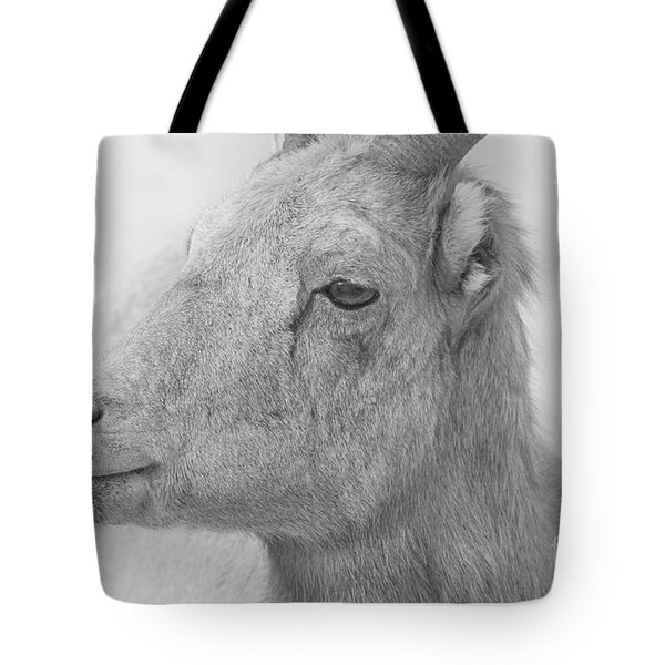 Bighorn Ewe Black And White Tote Bag