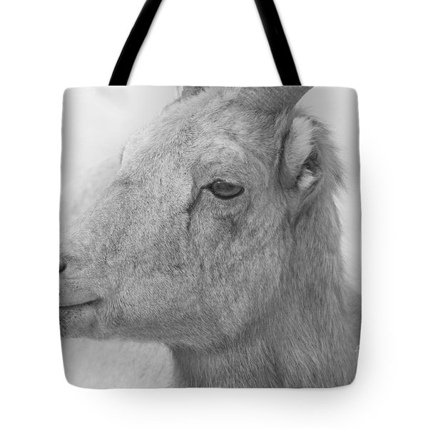Bighorn Ewe Portrait Black And White Tote Bag