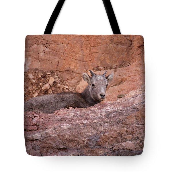 Bighorn Lamb1 Tote Bag
