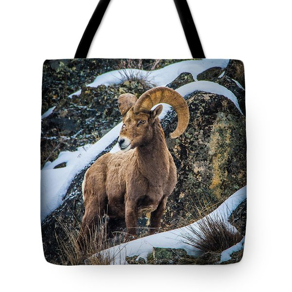 Bighorn Ram 2 Tote Bag