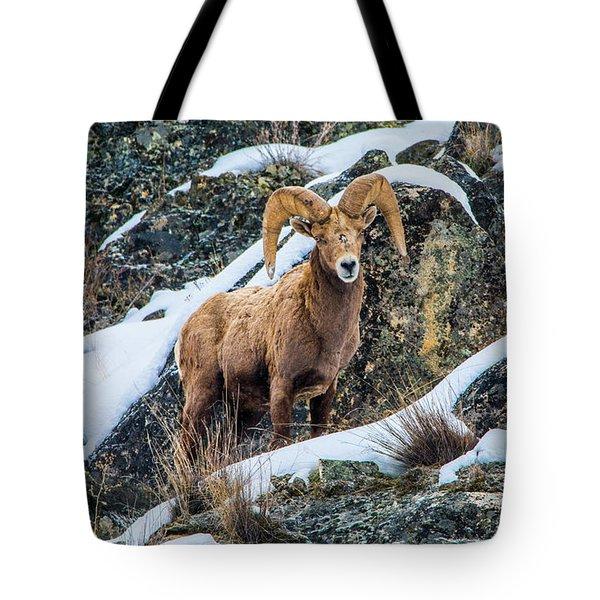 Bighorn Ram 3 Tote Bag