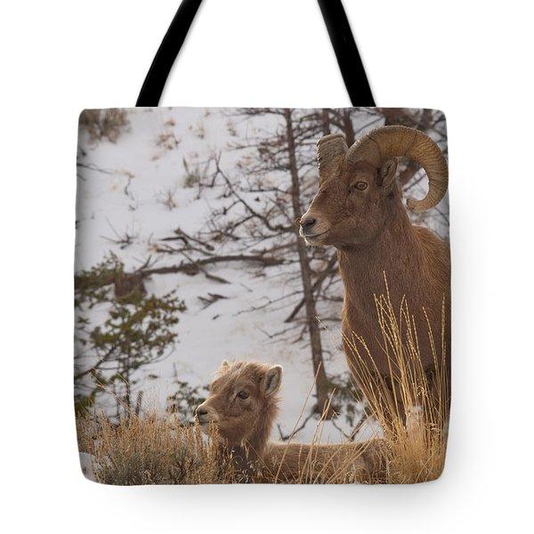 Bighorn Ram And Kid Tote Bag