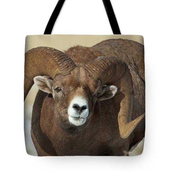 Bighorn Ram In Montana Tote Bag