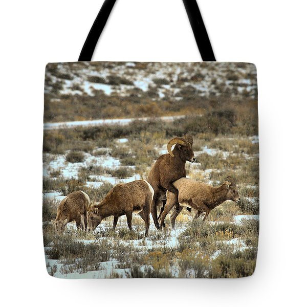 Bighorn Reproduction Tote Bag