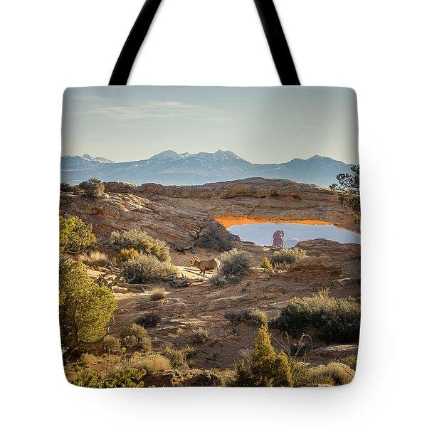 Bighorn Sheep And Mesa Arch Tote Bag