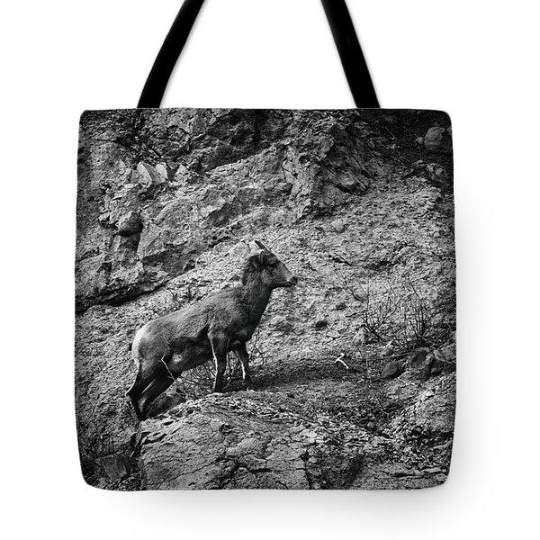 Bighorn Sheep Ewe On Wolf Creek Pass Tote Bag