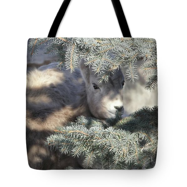 Tote Bag featuring the photograph Bighorn Sheep Lamb's Hiding Place by Jennie Marie Schell