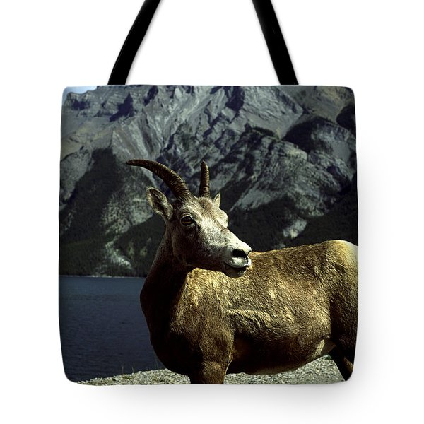 Bighorn Sheep Tote Bag by Sally Weigand