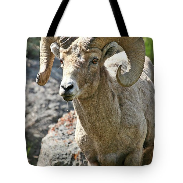 Tote Bag featuring the photograph Bighorn Sheep by Wesley Aston