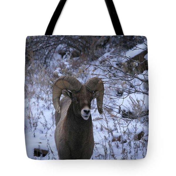 Bighorn5 Tote Bag