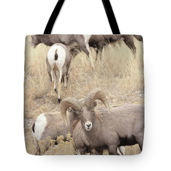Bighorn6 Tote Bag