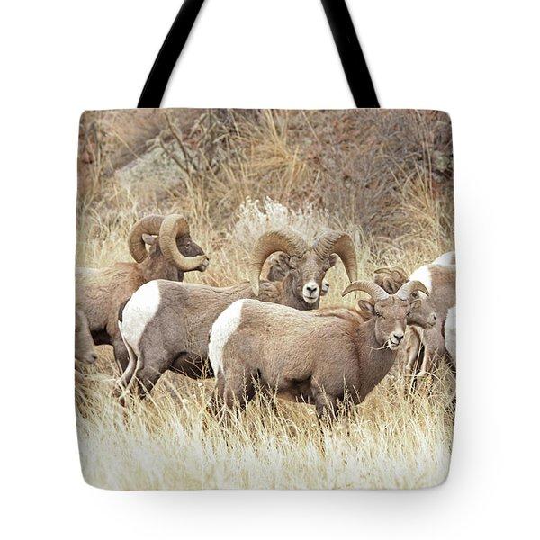 Bighorn7 Tote Bag