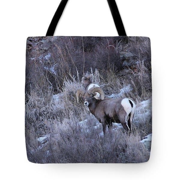 Bighorn8 Tote Bag