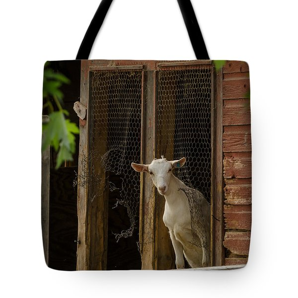 Tote Bag featuring the photograph Billy Goat by Dan Traun