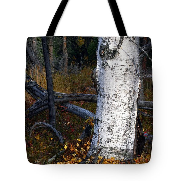 Birch Autumn 3 Tote Bag by Ron Day