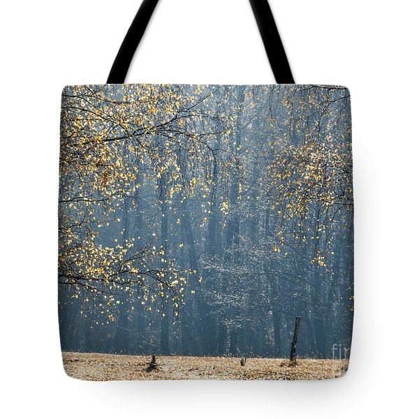 Birch Forest To The Morning Sun Tote Bag