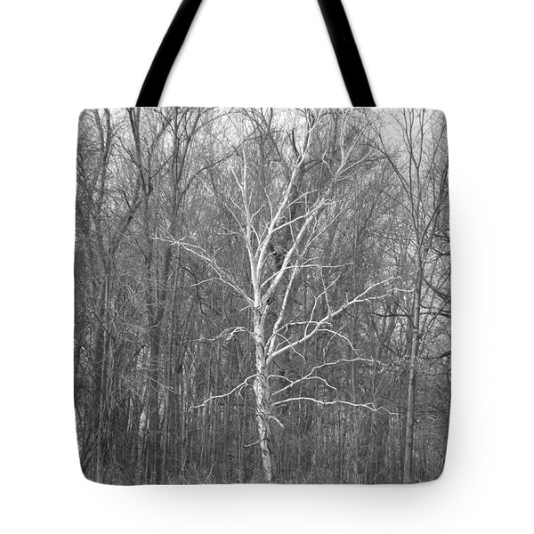 Birch In Bw Tote Bag by Erick Schmidt