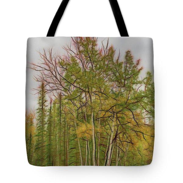 Birch Tree #1 Tote Bag