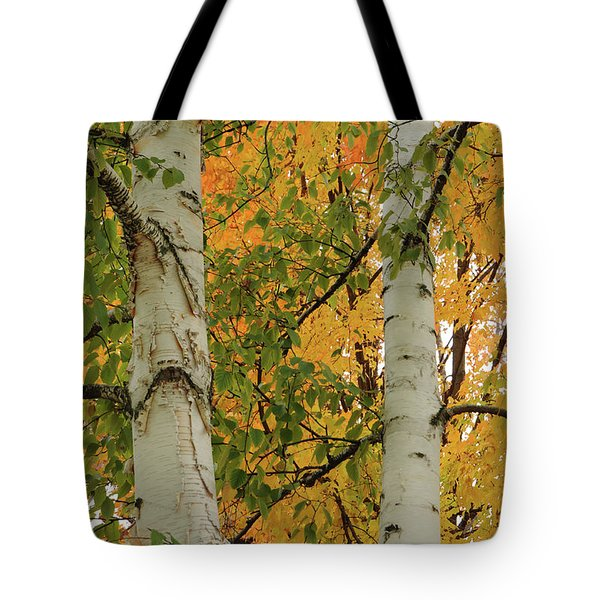 Birch Tree Tote Bag