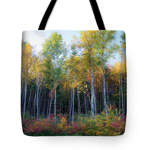 Birch Trees Turn To Gold Tote Bag