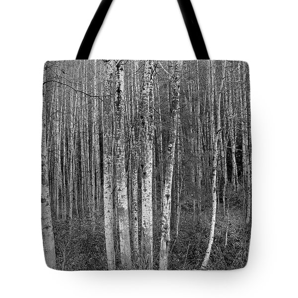 Birch Tress Tote Bag