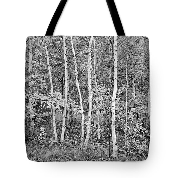 Birches Acadia 1995 Tote Bag
