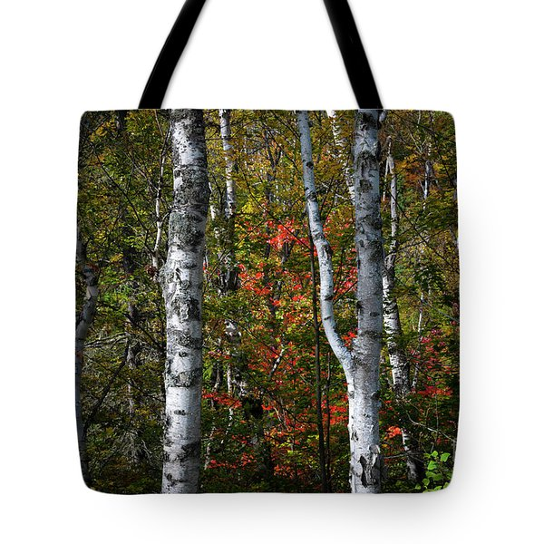 Tote Bag featuring the photograph Birches by Elena Elisseeva
