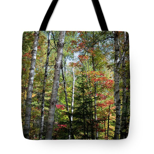 Tote Bag featuring the photograph Birches In Fall Forest by Elena Elisseeva