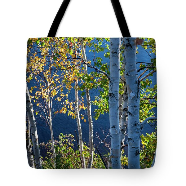 Tote Bag featuring the photograph Birches On Lake Shore by Elena Elisseeva