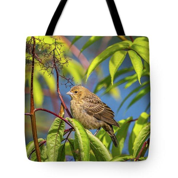 Bird Bush Blue Sky Tote Bag
