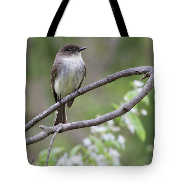 Bird - Eastern Phoebe Tote Bag by Ron Grafe
