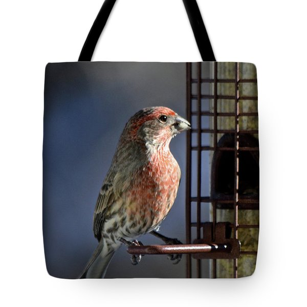 Bird Feeding In The Afternoon Sun Tote Bag