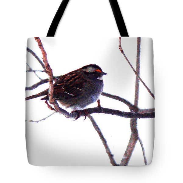 Tote Bag featuring the photograph Bird In A Winter Bush. by Roger Bester