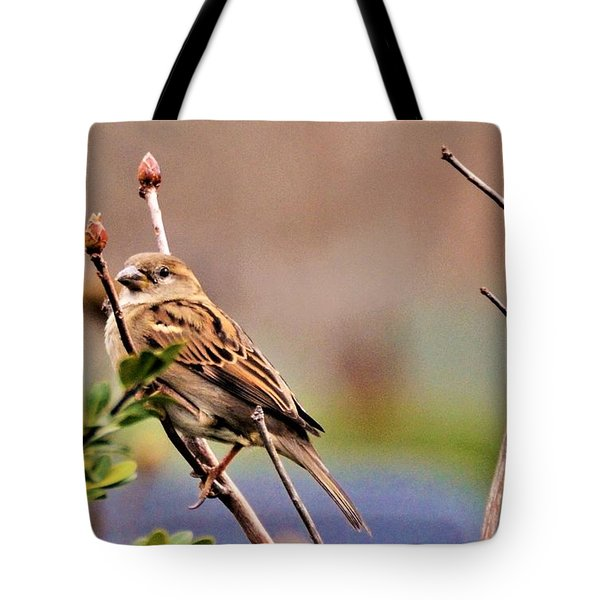 Bird In The Cold Tote Bag