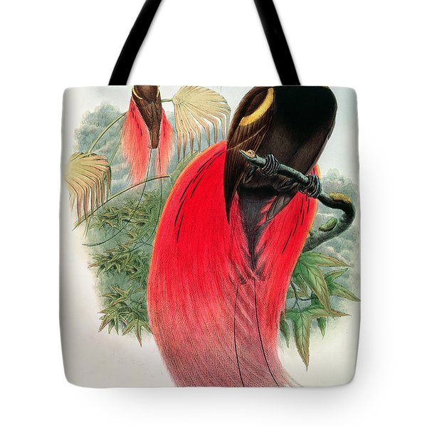 Bird Of Paradise Tote Bag by John Gould