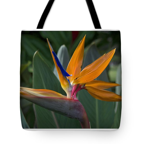 Bird Of Paradise Tote Bag by R Thomas Berner