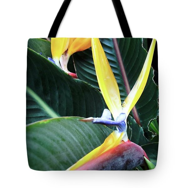 Birds Of Paradise With Leaves Tote Bag