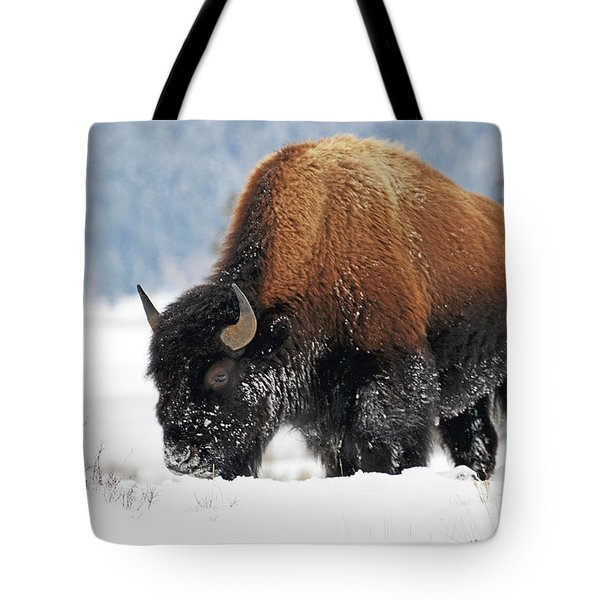 Bison Roaming In The Lamar Valley Tote Bag