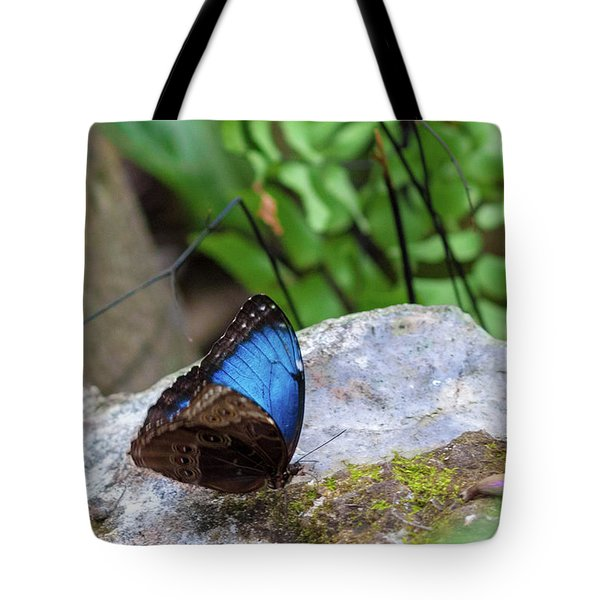 Tote Bag featuring the photograph Black And Blue Butterfly Eating by Raphael Lopez