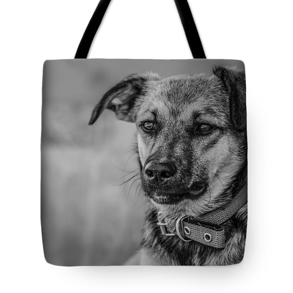 Black And White Dog Portrait Tote Bag by Daniel Precht