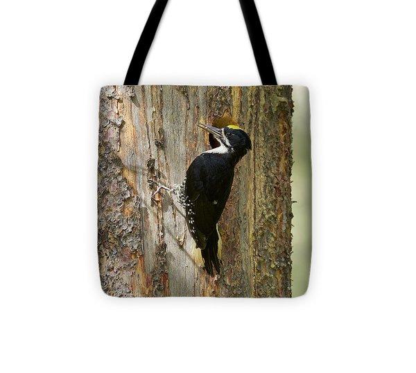 Black-backed Woodpecker Tote Bag by Doug Herr
