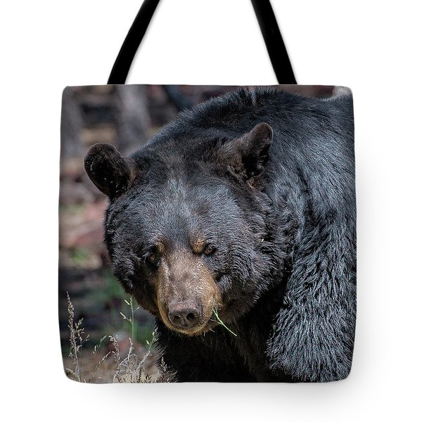 Tote Bag featuring the photograph Black Bear 2 by Phil Abrams