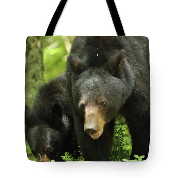 Tote Bag featuring the photograph Black Bear And Cub On Ground by Coby Cooper